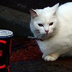White Cat  by Forfarlass