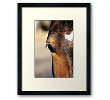 HORSE Framed Print