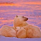 Polar family sunset by Owed to Nature