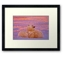 Polar family sunset Framed Print