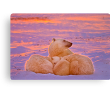 Polar family sunset Canvas Print