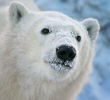 Face of a cub by Owed To Nature