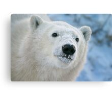 Face of a cub Canvas Print