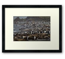 King Penguin & Elephant Seal Beach  Framed Print