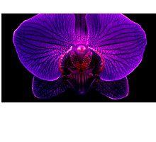 Orchidaceous Photographic Print