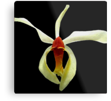 Tiny Dancer - A New Perspective on Orchid Life Metal Print