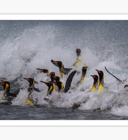 King Penguin Arrival Sticker
