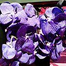 """Purple Paradise"" by kittenofdeath"