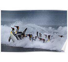 King Penguins Arrive Poster