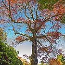 Autumn in BeBea Gardens by Steve Randall