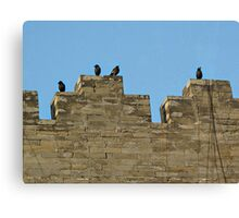 Wall Birds  Canvas Print