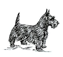 Scottie Dog Photographic Print