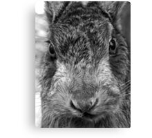 Mad as a March Hare (mono) Canvas Print