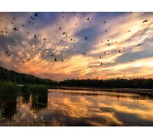 Coming in to Roost Photographic Print