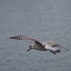 Juvenile Herring Gull by lezvee