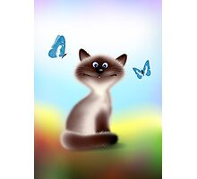 Sly Himalayan Cat & Butterflies Photographic Print