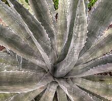 A Prickly Affair  by John  Kapusta