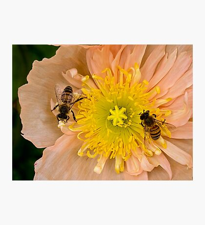 Happy bees Photographic Print