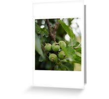 Green unripe apples Greeting Card