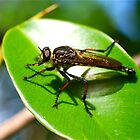 Ficus Bug by Penny Smith