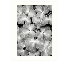 Abstract Leaves Bw Art Print