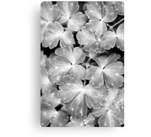 Abstract Leaves Bw Canvas Print
