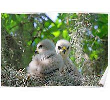 Fluffy little birds!! Poster