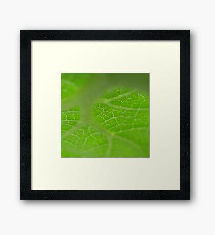 Green World Framed Print