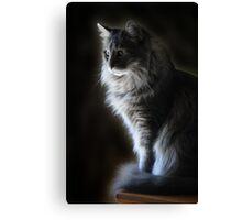 Backlit Kitty Canvas Print