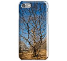 Very large oak trees iPhone Case/Skin