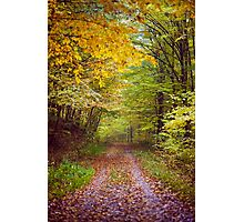 Autumnal scene in the woods Photographic Print