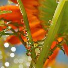 Garden Waterdrops  1 by relayer51