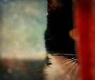 Cat by Ingrid Beddoes