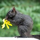 Squirrel With Flower by Rosemary Sobiera