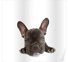 Portrait of a cute French Bulldog Poster