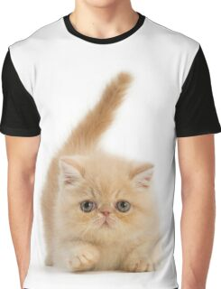 Cute Exotic Shorthair kitten Graphic T-Shirt