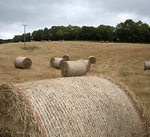 Bales Harvested by Keith Larby