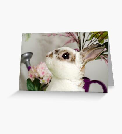 Inquisitiveness Greeting Card