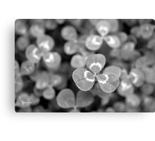Black and White Clover Canvas Print