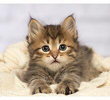 Cute Siberian kitten lying down Photographic Print