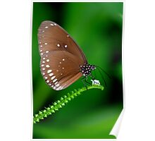 Amazing Brown Butterfly Poster