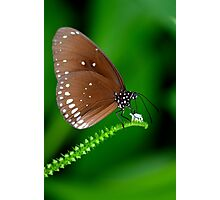 Amazing Brown Butterfly Photographic Print