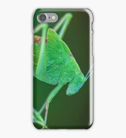 Young Bush-Cricket 2 iPhone Case/Skin
