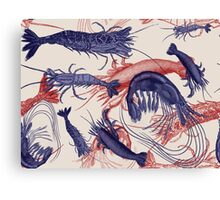 Blue and Red Vintage Shrimp Engravings Canvas Print