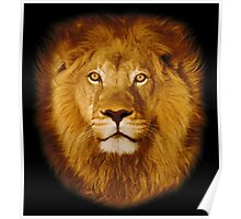Lion at sunset Poster