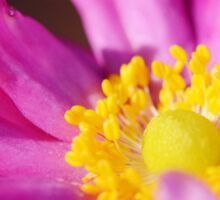 Morning Flower: Macro Photography Sticker