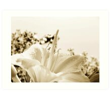 DAY LILY IN SEPIA TONE Art Print