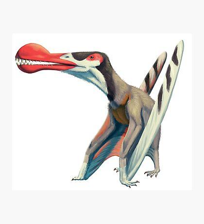 Ornithocheirus  Photographic Print
