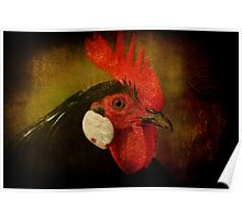 Rocky Rooster Poster