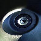 Eye see you. III by Bluesrose